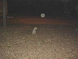 Ghost picture - Milton, Florida.