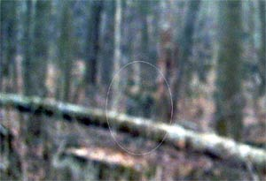 Ghost picture - Gettysburg, Pennsylvania.